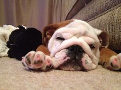 Please vote for this entry in Win £1,000 with Taylor Wimpey's Pets Make A Home Competition!