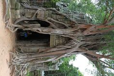 Cambodia Places Ive Been, Places To Go, Tree Mushrooms, Adventure Tours, A Whole New World, Amazing Pics, Holiday Destinations, Wonders Of The World, Travel Inspiration