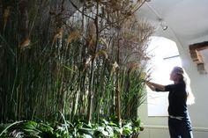 First the grasses and Heracleum was set on the big walk-true of 7 meters, at Alden Biesen, Fleur Amour Expo