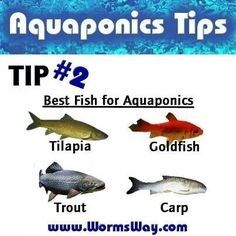 Backyard aquaponics www.aquaponics4yo... More