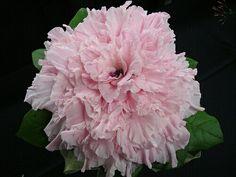 Pink Glamelia/Composite Wedding Bouquet