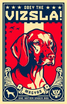 Vizsla will rule the world
