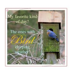 My favorite kind of day is a Bird chirping kind of day...Happy Spring!