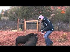 Piggy Myths