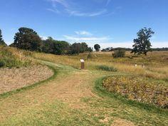 Meadow at Longwood Gardens