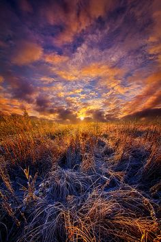 Morning Dance by Phil Koch on 500px