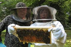 Carol Drinkwater                                                Bees feed us: now they need our help