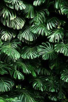 Fifteen Gardening Recommendations On How To Get A Great Backyard Garden Devoid Of Too Much Time Expended On Gardening Hawaiian Luxuriance By Teresa Lunt - Photo 125942135 - Tree Wallpaper Iphone, Green Wallpaper, Trendy Wallpaper, Tropical Leaves, Tropical Plants, Tropical Design, Tropical Pattern, Phone Backgrounds, Wallpaper Backgrounds