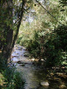 Ruta El Bosque - Benamahoma .G.
