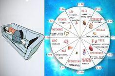 A kínai biológiai óra megmutatja melyik szerved nem működik jól