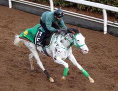 ブチコ All About Horses, Horse Racing, Beautiful Horses, Queens, Animals, Number, Colour, Sport, Image