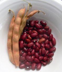 Hopi Red Dry Bean - Gardening Jones
