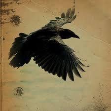 ravens birds - Google Search
