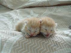 nos chatons l 39 adoption sur pinterest animaux spas et animaux. Black Bedroom Furniture Sets. Home Design Ideas