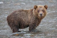Первозданная Камчатка. Часть 1 - Земля медведей.
