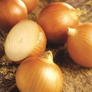 onion seeeds