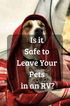 Is it Safe To Leave a Pet in an RV? Whether you RV with dogs, cats or any other pets here are some great RV pet tips and ideas for travel and camping. Click, Save or Send this article to learn more about traveling with dog, cats or other pets. Camping Gear, Camping Hacks, Rv Hacks, Family Camping, Camping With A Dog, Traveling With Dogs, Life Hacks, Backpacking Meals, Ultralight Backpacking