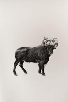 Amazing Bestiary of Improbable Animals & Miniature Graphite by Mateo Pizarro. |FunPalStudio|Illustrations, Entertainment, beautiful, Art, Artwork, Artist, nature, World, Creativity, drawings, paintings, Instagram, Improbable Animals, Graphite art.