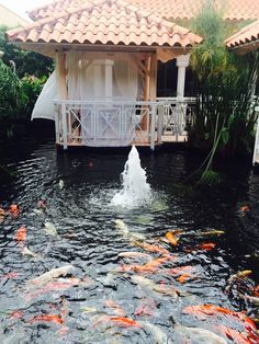 Koi pond around a nice big gazebo to just hang out and for Koi pond quezon city