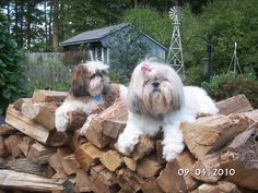 Chase & Chloe stacked all the wood