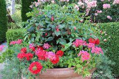 Galeria zdjęć - Jak zrobić sadzonki z roślin balkonowych - Ogrodowisko