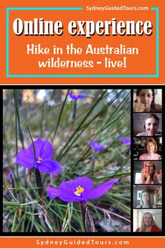 Join me on an hour long hike through Sydney's hidden and stunning natural environment -  from the comfort of your home! We'll look for mysterious carvings and find majestic, sculptured cliffs hidden in the national park. There are no people where we are going, just plants and animals in a beautiful and dramatic landscape.  This experience is 100% online. All you have to do is get your computer ready, have a proper internet connection, and enjoy your tour in a comfy setting. Travel Planner, Sydney Australia, Tour Guide, Mysterious, Wilderness, Connection, National Parks, Environment, Hiking