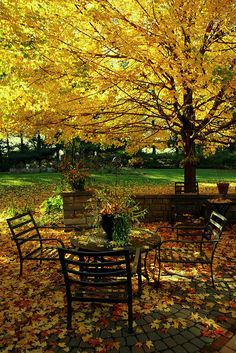 I want a backyard like this in the fall!