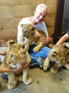 The new exhibit featuring the lion cubs opens Saturday at the Honolulu Zoo. Honolulu Zoo, Hawaii News, Lion Cub, Hawaiian Islands, Hawaii Travel, Cubs, Exhibit, Funny, Animals