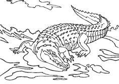 krokodile zum ausmalen - ausmalbilder krokodile | krokodil
