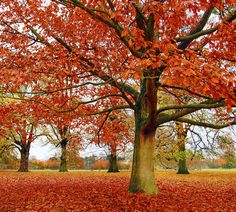 Leaf peepers come from all over to see the bursts of color that make up nature's fireworks. Check out these top areas for prime New England foliage.