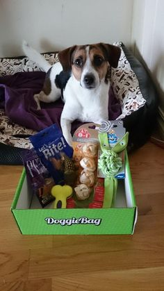 Cooper - DoggieBag.no #DoggieBag #Hund #Terrier #Dog