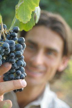 "Lambrusco by ""Grasparossa's grape"" #italianfood"