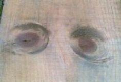 Çam kereste de ki doğal bakan gözler 1.