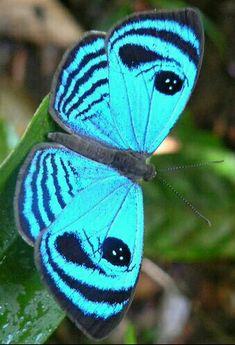 Butterfly Baby, Butterfly Kisses, Butterfly Flowers, Beautiful Bugs, Beautiful Butterflies, Amazing Nature, Types Of Butterflies, Flying Flowers, Butterfly Species