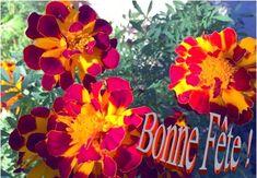 Le prénom Raïssa vient de l'hebreu rahel, brebis ou arabe rais, le chef, le guide. Classé 1007 ème des prénoms les plus donnés en France. Sainte Raïssa, Martyre à Alexandrie (4ème s.) --- John Douglas, Rose Mcgowan, Rais, Guide, France, Plants, Feast Of Immaculate Conception, Alexandria, Happy Name Day
