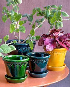 Buy Bergs Potter Copenhagen Glazed Plant Pot and Saucer - Amber -