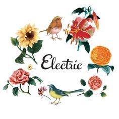 https://www.facebook.com/electricparos