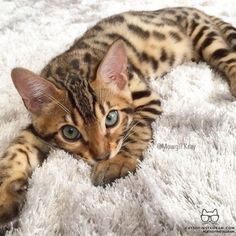 Shared > Beautiful Cats Images xo