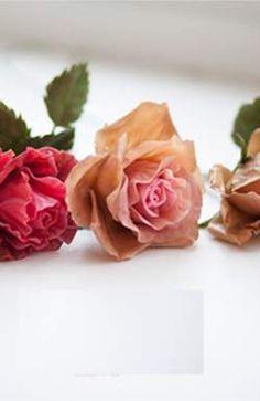 С катка флориста на цветочный склад можно прийти одновременно в Чехии Rose, Flowers, Plants, Pink, Plant, Roses, Royal Icing Flowers, Flower, Florals