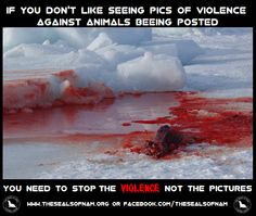 Graphic images posted on social media have been reported in the past. Facebook have allowed this one despite several objections from seal hunt supporters. Show your support for the Anti-seal hunt movement by posting it on YOUR timeline!