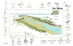 Salt Marsh - Outer Island Oyster Image, Salt Marsh, Climate Change, The Unit, Island, Thesis, Landscapes, Teaching, Google Search