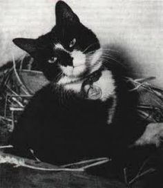 "Simon was the only cat to ever be awarded ""The Dicken Medal"" which was the animal equivalent of the Victoria Cross. He was the ship's cat aboard HMS Amethyst, which was stranded in China during the civil war in 1948. While the ship was trapped, Simon killed hundreds of rats and mice. He almost single-handedly prevented the crew from starving, as without him all their supplies would have been eaten by the rodents. He was awarded the medal but unfortunately died before it could be presented."