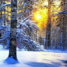 Scenery Pictures, Colorful Pictures, Nature Pictures, Cool Pictures, Beautiful Pictures, Winter Scenery, Winter Fun, Winter Landscape, Landscape Photos