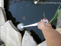 Toilet Brush Works To Remove Algae In Garden Ponds and DIY barley straw method