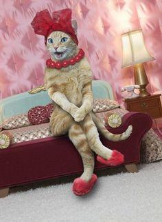 """Sexy Cat"" by John Lund"