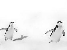 ⚡️Blitzlichter⚡️ Ins ewige Eis oder ans Ende der Welt – meine Reise in die Antarktis mit der MS Midnatsol