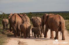 Un viaje por los parques naturales en Sudáfrica propuesto por @Magiaenelcamino