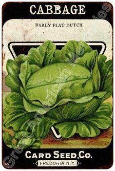 Vintage Sign Cabbage Card Seed Co. Garden Vegitable Sign 8x12 8123906