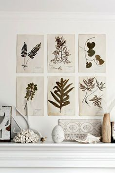 alamodeus: From bouquets to botanical art ...
