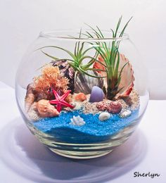 Tillandsia/Airplant beach themed terrarium.
